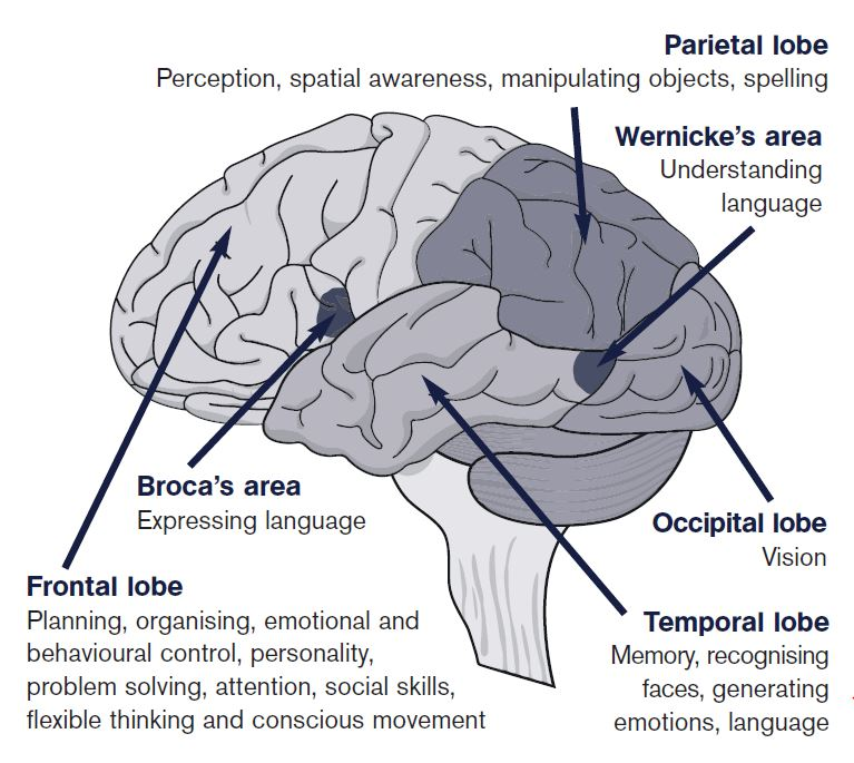 frontal lobe functioning and its relationship to cognition emotion