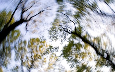 A spinning forest, signifying dizziness